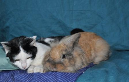 ¿Qué animales se llevan bien con los conejos?