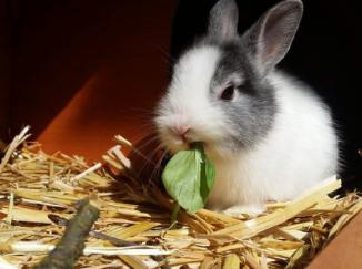 9 mitos comunes del conejo