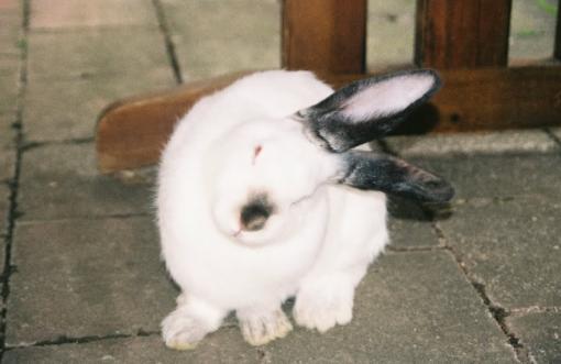 Mi conejo esta enfermo