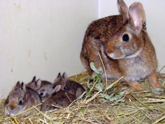 Todo sobre los conejos