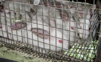 maltrato animal conejos