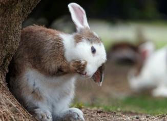 ¿Es un conejo la mascota adecuada para ti?