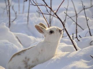 Cómo cuidar a su conejo mascota Los conejos son mascotas únicas.tiernos y adorables que tienen necesidades específicas para poder vivir una vida larga, feliz y saludable. Aquí proporcionamos una descripción básica sobre cómo cuidar a un conejo mascota ideal:
