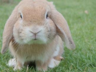 Los cuidados de un conejo: Guía básica Los conejos son mascotas familiares populares. Armado con el conocimiento correcto, mantener a su conejo feliz y saludable es relativamente sencillo.