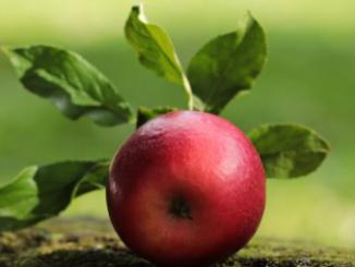 Frutas, verduras, hierbas y plantas seguras para conejos Los conejos adoran su comida y disfrutan de frutas y verduras frescas como parte de una dieta balanceada. La parte principal de la dieta de un conejo debe ser una cantidad ilimitada de heno fresco, pasto y abundante agua limpia disponible